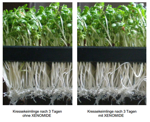 A test with garden cress should also prove the protective power of the Xenomide. The text and other pictures tell us that after six days a clear difference in growth was observed. After just three days this difference was not yet observable, no wonder, because both photos above are from the same tray, as one can easily verify