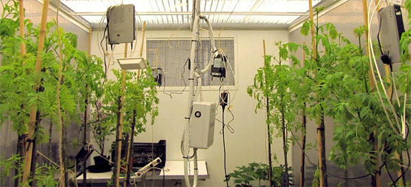 Climate chamber with Wi-Fi transmitters (src: report Wageningen University)