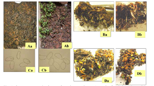 Fig. 2. Some representative images from the experiment. A: seeds after 7 days; B: seeds' roots after 10 days; C: drawings of seeds after 10 days; D: seeds removed from their initial location and set under 2 μW/m2. Each time, for each image: a = seeds kept under 70 – 100 μW/m2, and b: seeds kept under 2 – 3 μW/m2.